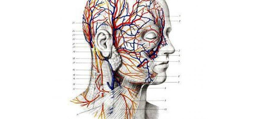 Нервы лица и шеи